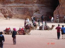 Photo of Amman Private Tour: Petra Day Trip from Amman In front of the Treasury
