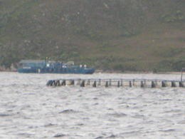 Atlantic Salmon Pens - Macquarie Harbour , David B - April 2011