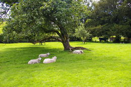 Photo of Lake District Beatrix Potter's Lakeland Tour 'We are the sheep of His pasture'