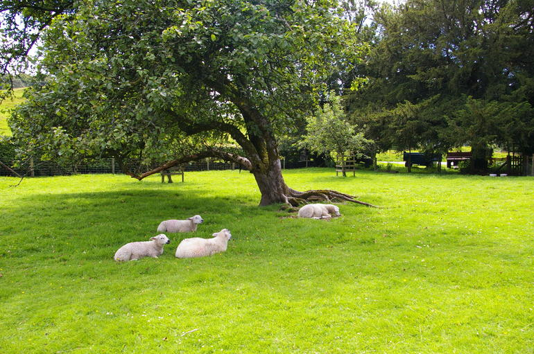 'We are the sheep of His pasture' - Windermere