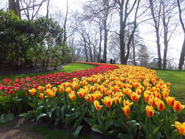 Photo of Amsterdam Amsterdam Super Saver 1: Keukenhof Gardens Day Trip and Amsterdam City Tour Keukenhof