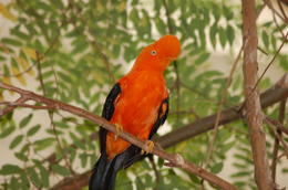 Photo of San Diego San Diego Zoo Safari Park Bird