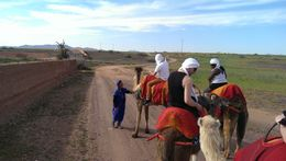 Photo of   camel riders