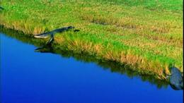 Photo of Orlando Kennedy Space Center at Cape Canaveral Croc