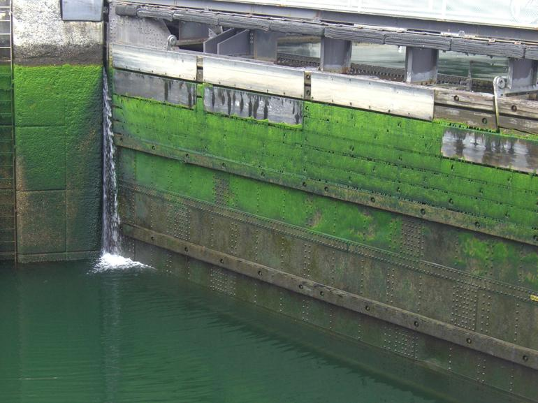 Ballard Locks: Closeup shot of mossy walls within the locks with water low