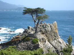 This is the famous Lone Cyprus Tree on the 17-mile drive. , SAMEER C - May 2011