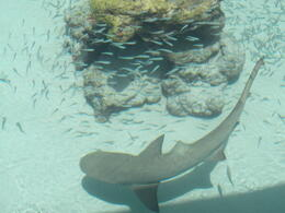 Photo of St Thomas Swimming with Sharks at Coral World Ocean Park The Shark Tank