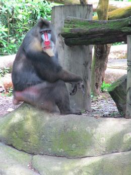 Photo of Singapore Private Tour: Singapore Zoo Morning Tour with optional Jungle Breakfast amongst Orangutans Things to do in Singapore