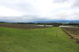 Foto von Melbourne Wein- und Weinguttour im Yarra-Tal ab Melbourne Yarra Valley Wine and Winery Tour from Melbourne