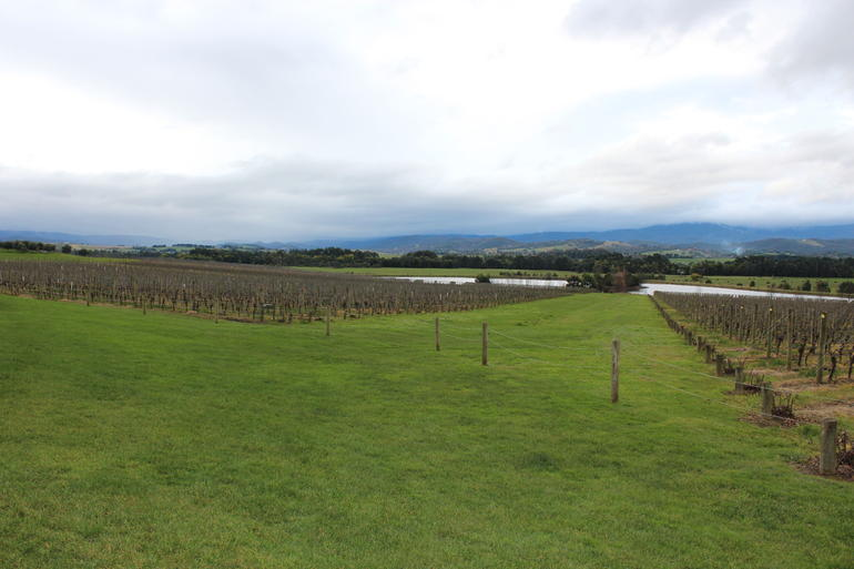 Yarra Valley Wine and Winery Tour from Melbourne - Melbourne
