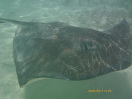 Photo of Antigua and Barbuda Island Safari and Stingray Fantasy Antigua Antigua Präsi (626)