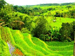 Photo of Bali Bali Pura Luhur Batukaru Temple and Cultural Small Group Tour Beautiful Bali Rice paddies