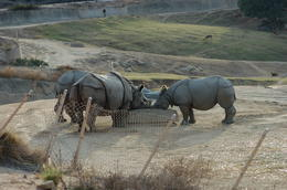 Photo of San Diego San Diego Zoo Safari Park Rhinos, San Diego Zoo Safari Park