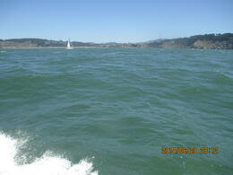 Photo of San Francisco Whale Watching & Wildlife Eco Tour from San Francisco Wellengang