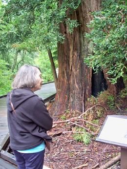 Studying the tree., Ed K - May 2010