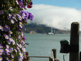 Photo of San Francisco Muir Woods, Giant Redwoods and Sausalito Half-Day Trip The bay area at Sausalito
