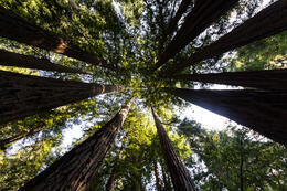 Photo of San Francisco San Francisco Super Saver: Muir Woods and Wine Country Tour We're small