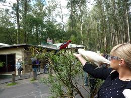 Photo of Melbourne Yarra Valley Wineries and Puffing Billy Steam Train Day Tour from Melbourne Yarra Valley winery tour departing from Melbourne - Federation Square