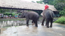 Photo of Bangkok Floating Markets and Rose Garden Cultural Center Day Tour from Bangkok Baby elephant called Two Pin