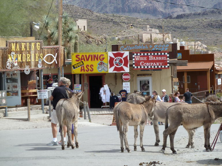 Burros of Oatman Arizona - Las Vegas