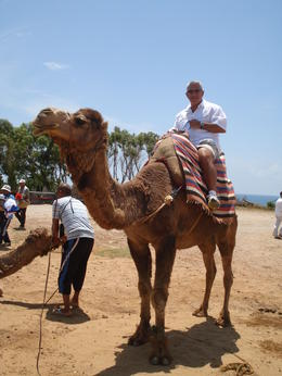Photo of Costa del Sol Tangier, Morocco Day Trip from Costa del Sol Camel riding in Morocco