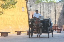 Horse-drawn carriage rides available in Cartagena., Bandit - September 2012