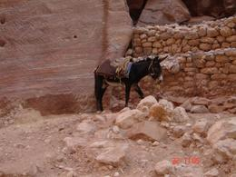 Photo of Amman Private Tour: Petra Day Trip from Amman Inside Petra
