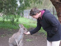 Chance to feed the kangaroos , Stacy F - May 2012
