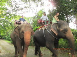 Photo of Bangkok Khao Yai National Park and Elephant Ride Day Trip from Bangkok Riding elephant