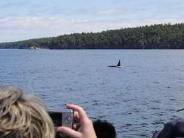 J-pod whale passing right by our boat! - July 2010