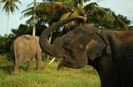 Photo of Phuket One-Hour Elephant Jungle Trek from Phuket Thai Elephant