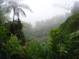 It's raining...in the rain forest. Go figure. , Marc V - May 2011