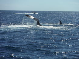 Photo of Los Cabos Los Cabos Reef Snorkeling Cruise Whale pod