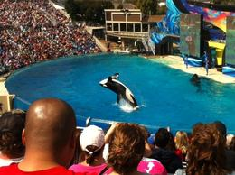 Photo of San Diego SeaWorld® San Diego SeaWorld