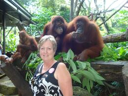 Photo of Singapore Singapore Zoo Morning Tour with optional Jungle Breakfast amongst Orangutans Singapore Zoo Breakfast