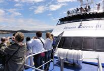 Photo of Seattle Friday Harbor Day Trip & Whale Watching from Seattle