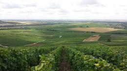 Photo of Paris Champagne Region Day Trip from Paris by Minivan Vineyard