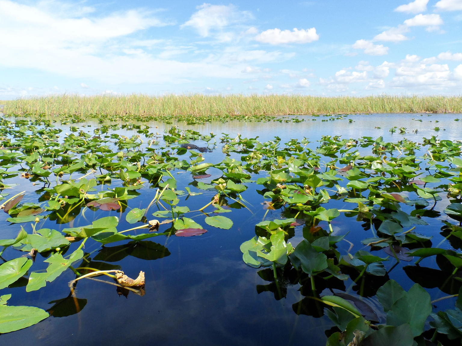 Florida Everglades Airboat Tour and Alligator Show from Fort Lauderdale