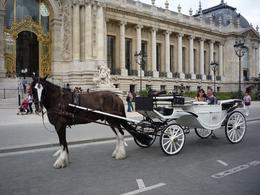 Photo of Paris Romantic Horse and Carriage Ride through Paris Full shot of carriage and horse, Pride.