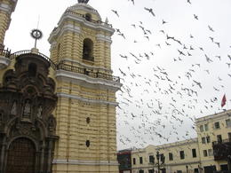 Birds flying around the Monastery in Lima. Inside are where the catacombs are but you aren't allowed to take pictures of video of the inside., Bandit - June 2012