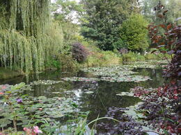 Spend most of your time at the pond and garden and it will be worthwhile. , Kathy E - October 2014