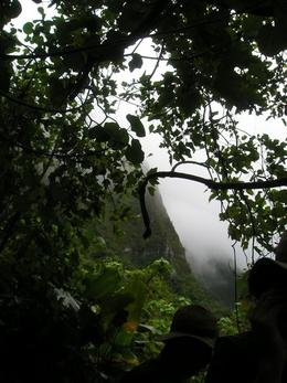 Photo of Oahu Manoa Waterfall Small Group Adventure Rainy Mountain View