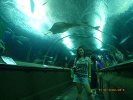 Photo of Singapore Singapore Sentosa Island Afternoon Trip Underwater Aquarium