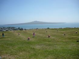 Photo of Auckland Auckland Highlights combined with Wilderness Experience Eco-Tour View from Fort Victoria