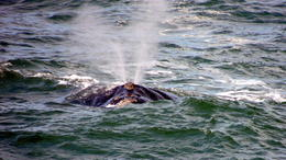 Photo of Cape Town Hermanus Day Trip with Seasonal Whale Watching Watching whales