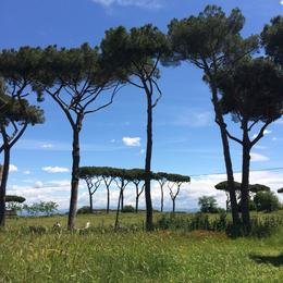 Umbrella pines near the Roman aqueduct, laura s - June 2014