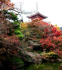 Photo of one of buildings in I think the Kiyomizu temple complex of buildings, on Kyoto tour, Beh d - November 2010