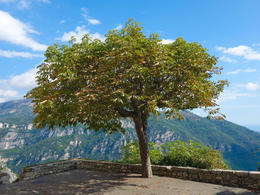 Photo of Nice Provence Countryside Small Group Day Trip Magnificent tree in St Paul de Vence