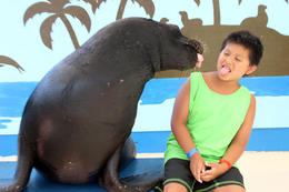 Sea Lion encounter at Coral World , Cherie F - June 2013