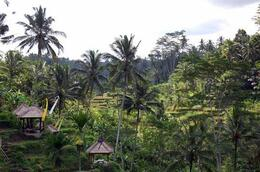 Photo of Bali Bali Kintamani Volcano, Ubud and Barong Dance Full-Day Tour Terraced Rice Fields - Bali